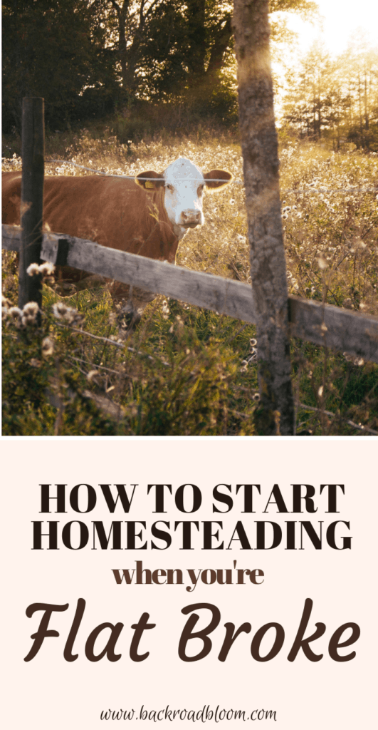 how to start homesteading when you're flat broke, homesteading for beginners, homesteading on a budget