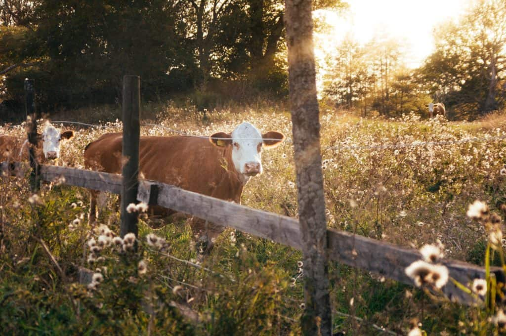 homesteading for beginners, homesteading on a budget, how to start a homestead from scratch, starting a homestead with nothing